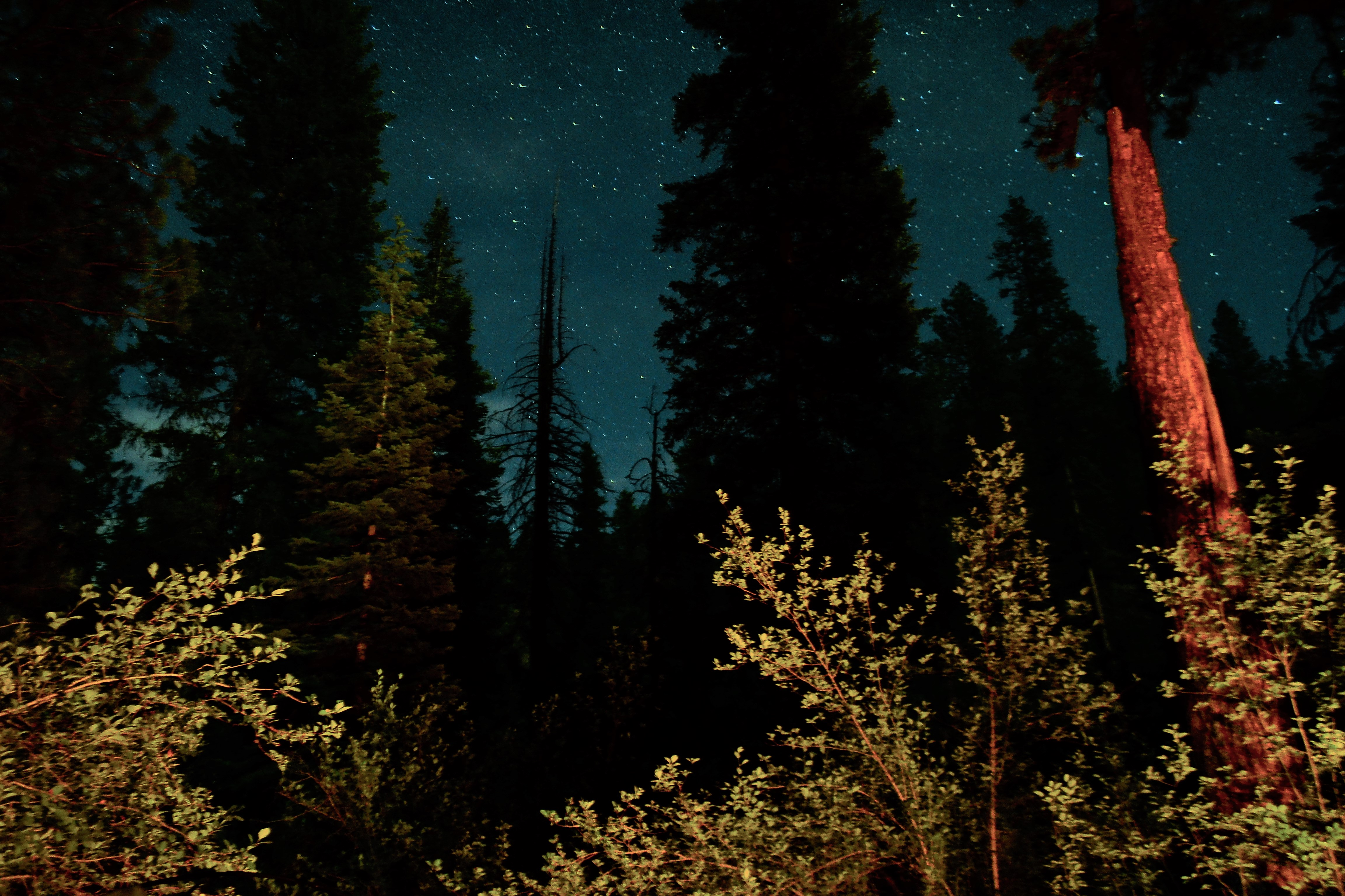 The night sky above Big Flat Campground on the Council Ranger District.