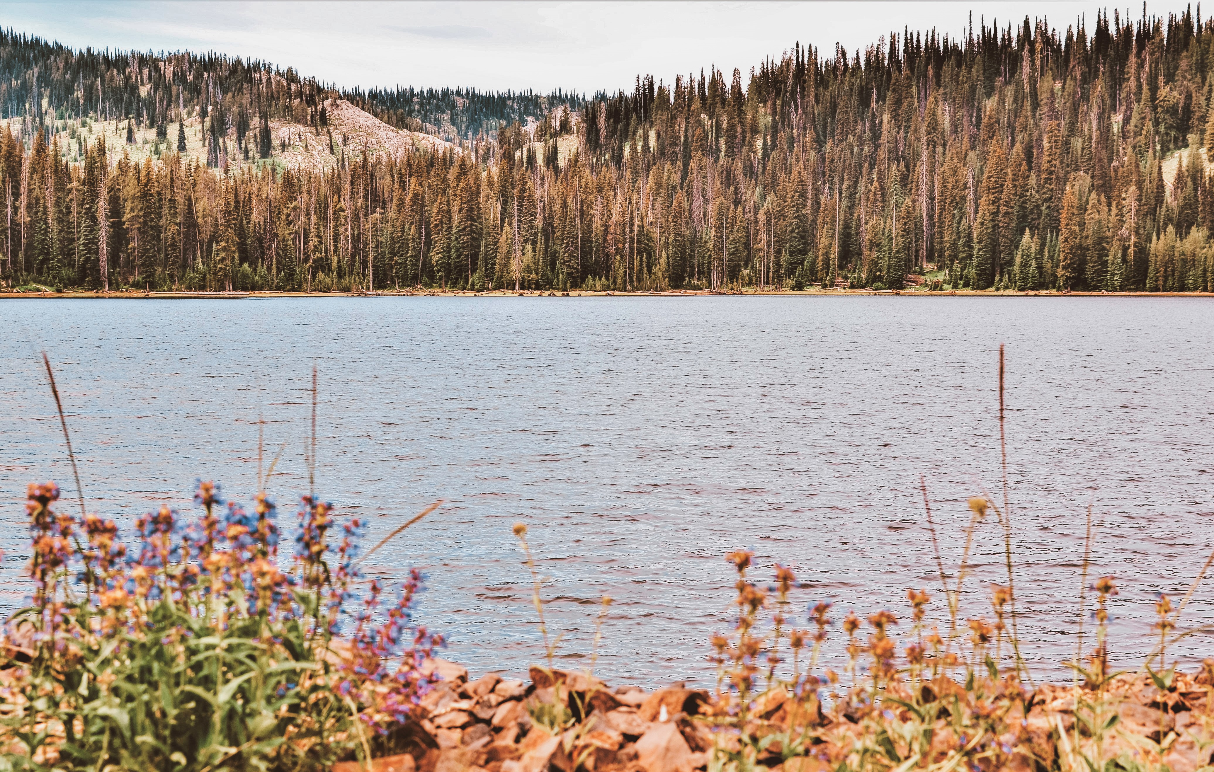 Goose Lake on the New Meadows Ranger District.